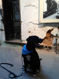 Erwin, one of the dogs in the New Leash on Life USA program, is guided through the historic cellblocks at Eastern State Penitentiary.