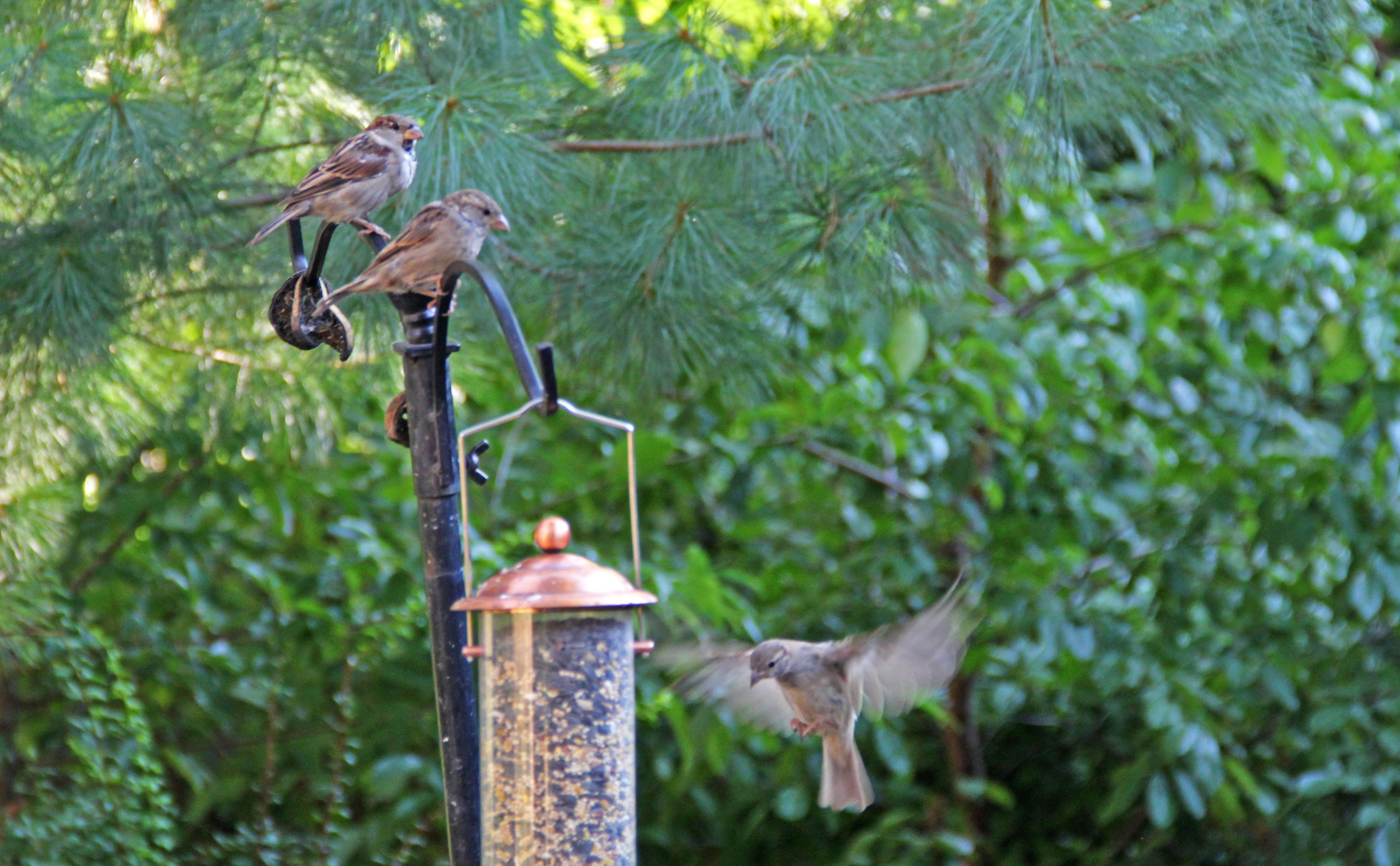 The bird sanctuary on Melville Street is a hidden gem for Spruce Hill.
