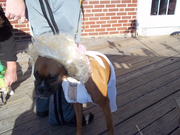 """The winner of the dog costume contest was a boxer dressed up as Marilyn Monroe in her iconic """"Seven Year Itch"""" dress."""