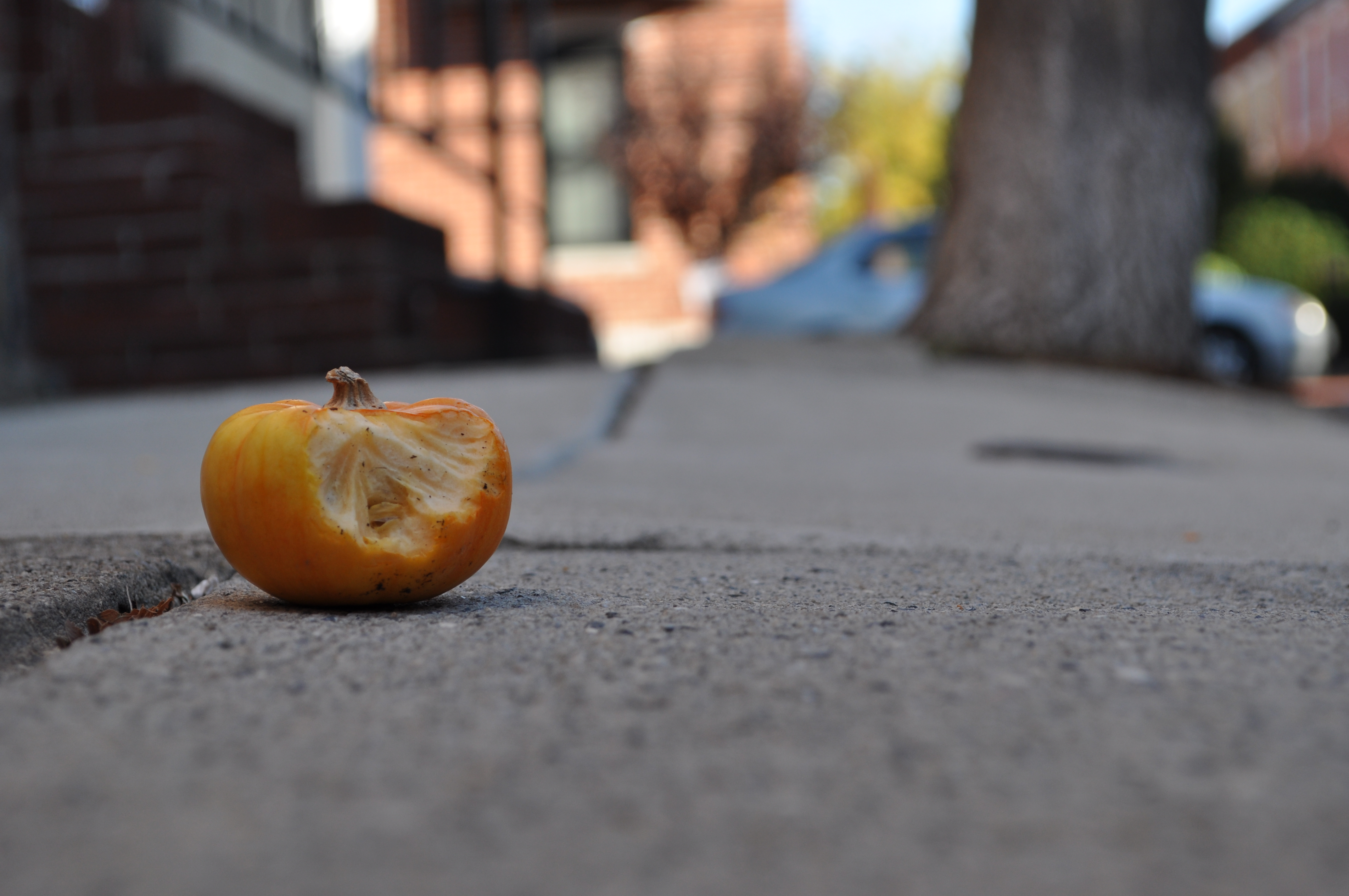 A small, busted pumpkin rests on the sidewalk outside of a home on Fitzwater Street.