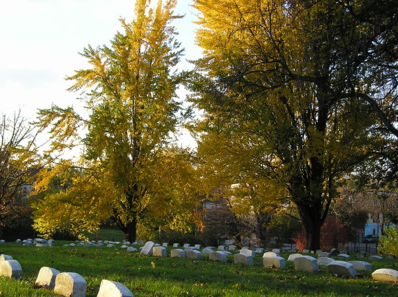 Historic Fairhill Burial Ground (Courtesy: Historic Fairhill)