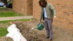 John Eskate tends to the vegetables planted outside the Klein JCC greenhouse