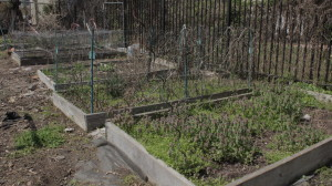 Growing plots line a garden on Bouvier Street.