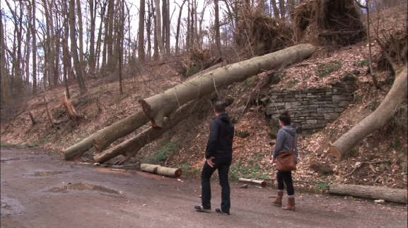 A couple admired fallen trees along trails in the Wissahickon Valley Park.