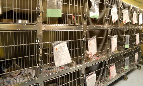 The ACCT receives many cats. Check out what promotions the ACCT offers on adoptable cats.