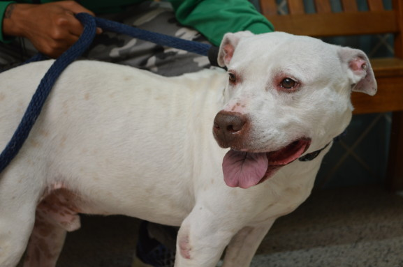 Frosty is a child-friendly dog that was bought to the PSPCA for cruelty and neglect. He loves going for long walks and getting massages. He is currently available for adoption.
