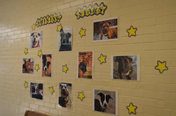 The Star Wall features animals that have been at the SPCA for a while and need a loving home. All of the animals on the Star Wall are available for adoption.