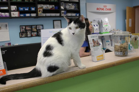 PPHC's house cat Texas took a seat on the front desk.