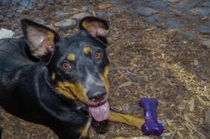 Doggie Depot dog