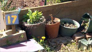PlantsPlotNumber