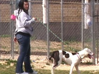 SPCA volunteers walk and play with the dogs housed at the Hunting Park headquarters.